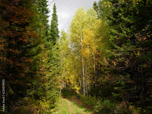 Fototapeten Wald siberian autumn forest