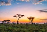 Fototapeta Sawanna - Beautiful sunset with dramatic sky in African savanna