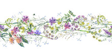 Watercolor Summer Wildflowers Seamless Border Botanical Colorful Illustration