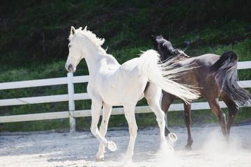Obraz na płótnie Canvas 黒い馬と白い馬