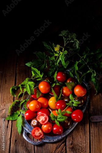 Fototapety, obrazy: various types of tomatoes served and presented on the silver platter.