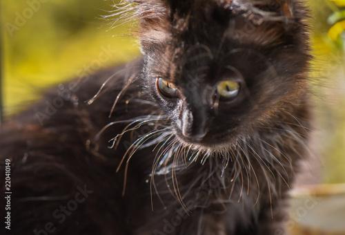 Cadres-photo bureau Croquis dessinés à la main des animaux Cat and flowers