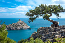 Crimean Pine On A Cliff Overlo...