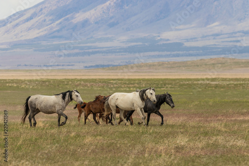 Photo  Wild Horses in the Utah Desert in Summer