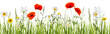 canvas print picture - mohn, kamille, freigestellte sommerwiese