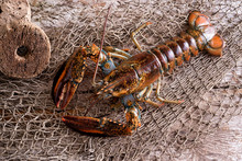 Live Atlantic Lobster