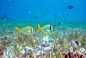 Fototapeta na wymiar Swimming with sea animals in Hol Chan Marine Reserve, Belize