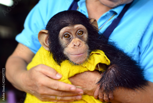 Photo baby chimpanzee ape at the zoo.