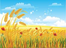 Summer Rural Landscape. Wheat Field