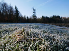 First Morning Frost On The Grass Of A Meadow