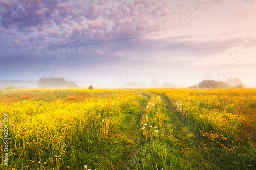 Canvas Prints Honey Autumn landscape. Fall nature.
