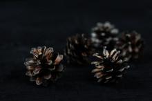 Pine Cones On Black Wooden Background