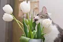 The Cat Eatig Tulips