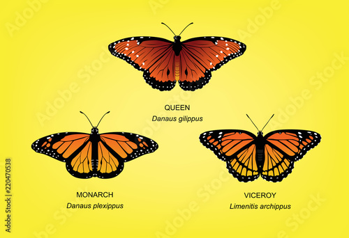 Fotografie, Obraz Butterfly Monarch Set Vector Illustration