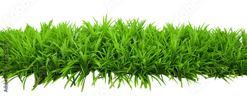 Leinwand Poster Green bush leaves isolated on white background with clipping path included