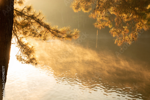 Fotomural Tranquil scenery of lakeside forest in the morning - selective focus