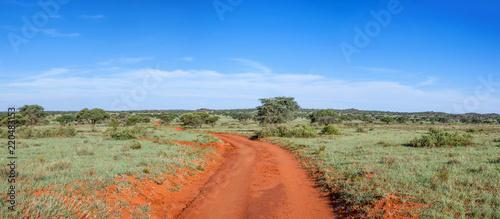 Fotobehang Olijf Northern Cape Landscape