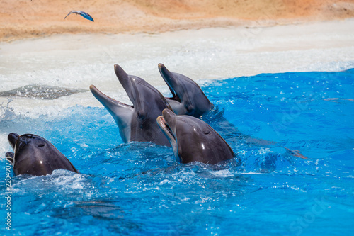 Group of dolphins during feeding.