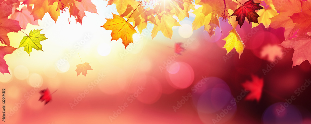Fototapety, obrazy: Falling Autumn Maple Leaves Natural Colorful Background