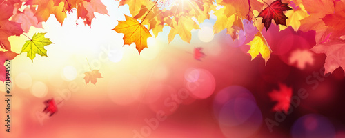 Photo sur Aluminium Arbre Falling Autumn Maple Leaves Natural Colorful Background