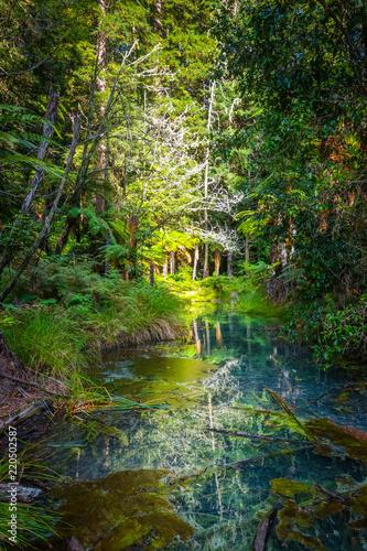 Spoed Foto op Canvas Oceanië Whakarewarewa Redwood forest, Rotorua, New Zealand