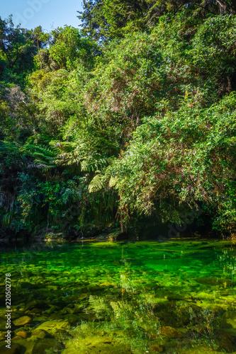 Spoed Foto op Canvas Oceanië River in Abel Tasman National Park, New Zealand