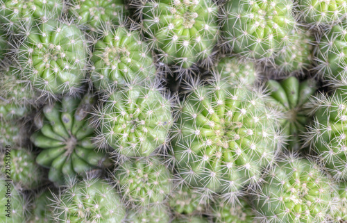 Staande foto Cactus Beautiful Cactus natural pattern wallpaper background, Copy space Top view.
