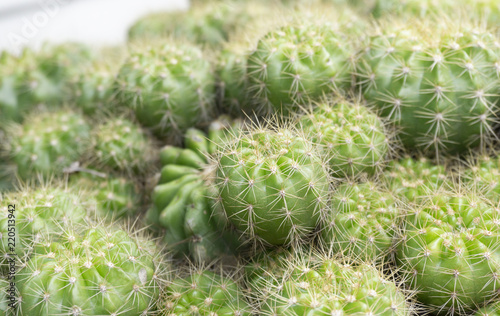 Foto op Canvas Cactus Beautiful Cactus natural pattern wallpaper background,Copy space Top view..