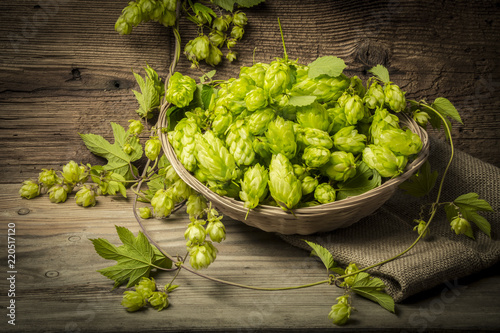 Keuken foto achterwand Kruiderij hop plant with cones on an old table close up