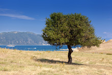 Lonely Tree On A Dry Island