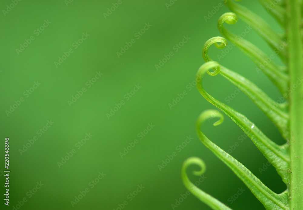 Fototapety, obrazy: Exotic green tropical ferns with shallow depth of field (dof).