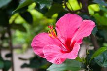 Four O'Cloack Flower
