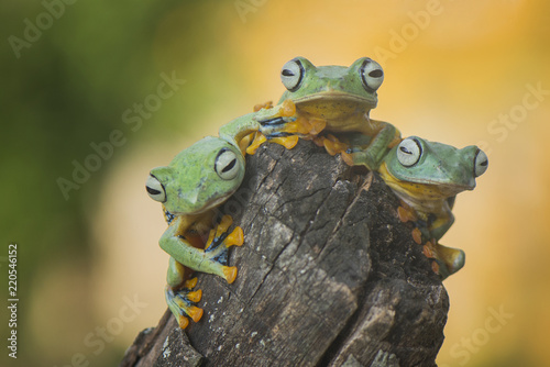Tuinposter Kikker Flying Frog