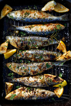 Grilled Sardines In A Herbal L...
