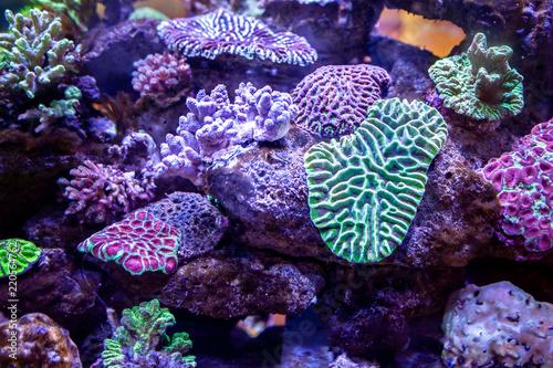 Fotobehang Koraalriffen Underwater coral reef landscape background in the deep lilac ocean