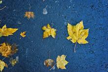 Beautiful Multicolor Autumn Leaves Leaves With Rain Drops On Dark Wet Asphalt Background.