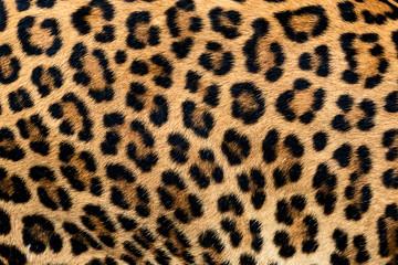 FototapetaDetail skin of leopard.