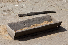 Old Wooden Trough With Grain