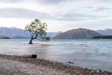 Lonely Tree In Wanaka Lake, New Zealand Natural Landscape Background