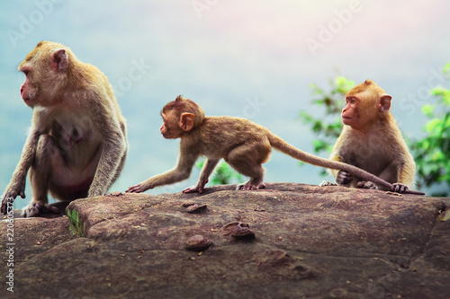 Mother monkey with baby Canvas Print