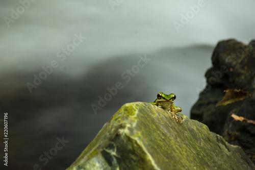 Zdjęcie XXL Zielona żaba na skale