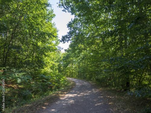 Piste Forestière Dans La Forêt De Tronçais Au Coeur De La