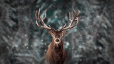 Fototapeta Room - Noble deer male in winter snow forest. Artistic winter christmas landscape.
