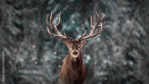 Montage in der Fensternische Hirsch Noble deer male in winter snow forest. Artistic winter christmas landscape.