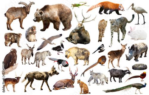 Foto op Aluminium Pauw animal collection asia
