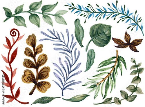 Valokuva Watercolor illustration Botanical leaves collection Set of wild and garden and a