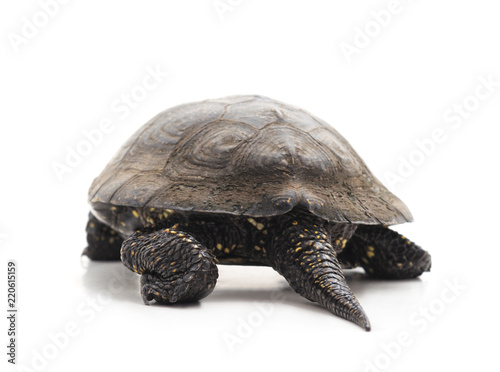 Foto op Aluminium Schildpad One beautiful turtle.
