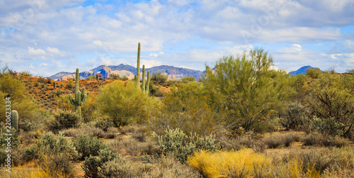 The many faces of the beautiful Sonoran Desert in Arizona makes this land so wonderful to explore, visit, hike and photograph. The rocky mountains, desert fauna, sky and landscape is unique