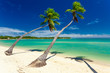 Tropical beach with coconut palm trees and clear lagoon, Fiji Islands