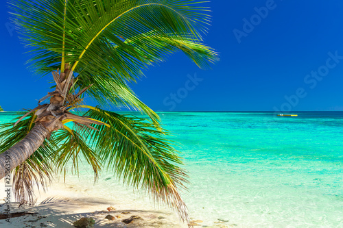 Tropical beach with coconut palm trees and clear lagoon, Fiji Islands Wallpaper Mural